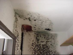 mold damages